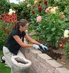 آموزش باغبانی و گلهای آپارتمانی