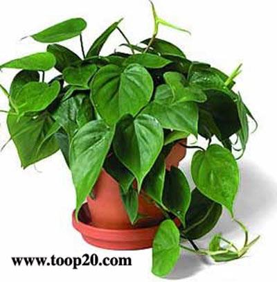 آموزش باغبانی و پرورش گل و گیاه آپارتمانی -  2DVD